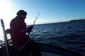 Fiskegruppa